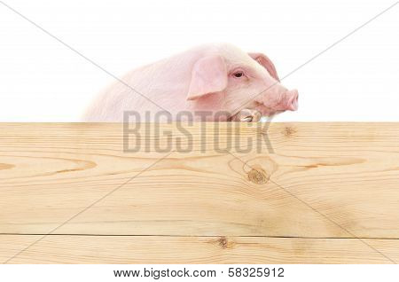 Pig With Board