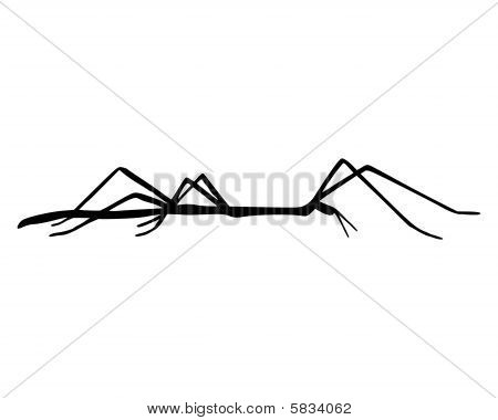 Black and accurate illustration of stick insect poster