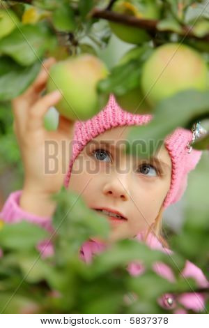 The girl and an apple-tree