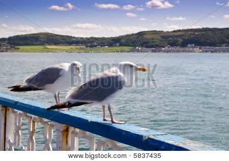 Typical Welsh seaside resort of Llandudno with seagulls in foreground poster