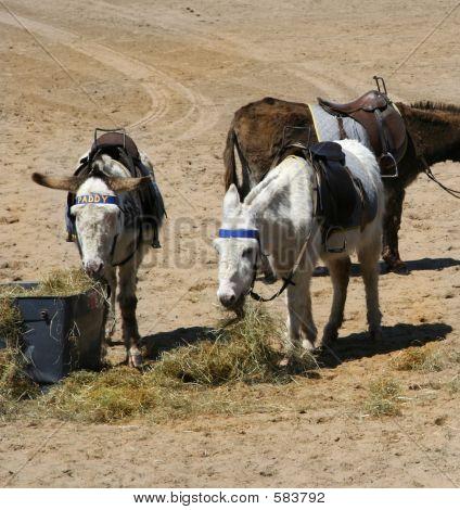Beach Donkey Lunch