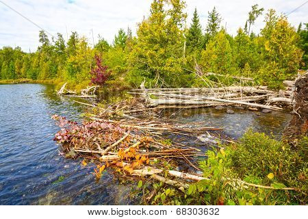 A Beaver Dam In The Wilderness
