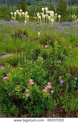 Spirea and Bear Grass Wildflowers