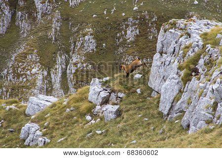 Deer Running Down The Hill