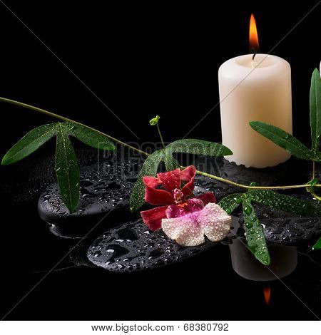 Beautiful Spa Concept Of White And Red Orchid (cambria), Green Tendril, Candle On Zen Stones With Dr