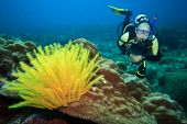 Diver underwater with feather starfish on foreground. Focus on diver poster