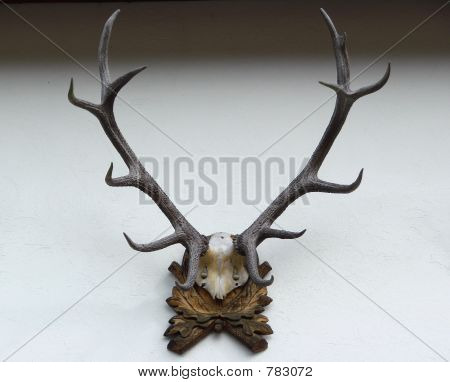 deer antler on the wall poster