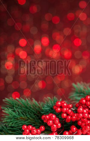european holly on red background (shallow DOF)
