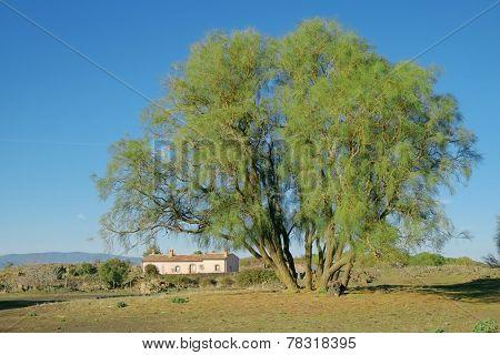 Mount Etna broom and refuge of Brooms Plain in Etna National Park, Sicily