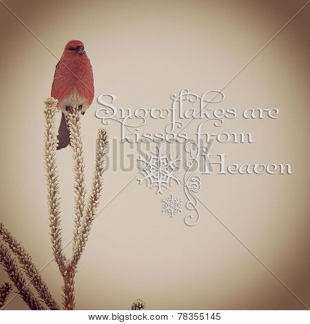 Beautiful Instagram Of Wild Red Bird With Quote