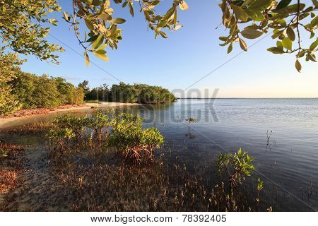 Mangroves in the Atlantic Ocean. Cayo Guillermo. Cuba. poster