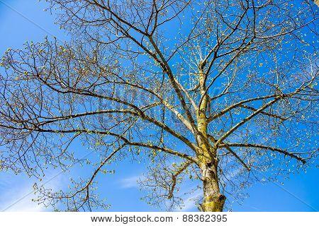Silhouette Of A Tree On Blue Sky