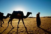 Picture of camel and man walking through the desert poster