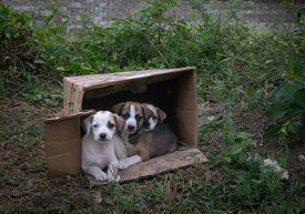 Abandoned Puppies In A Cardboard Box
