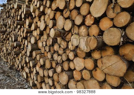 Forestry Timber Stack