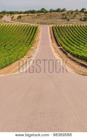 Vineyards Road