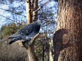 a curious dove sitting on a tree with shadow on the trunk poster