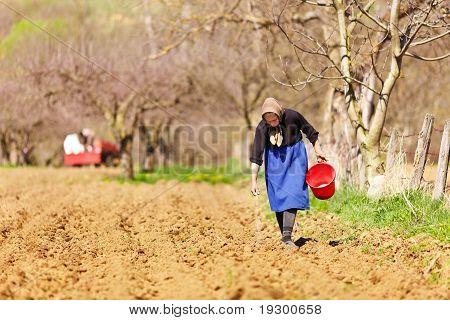 Senior agricultora siembra