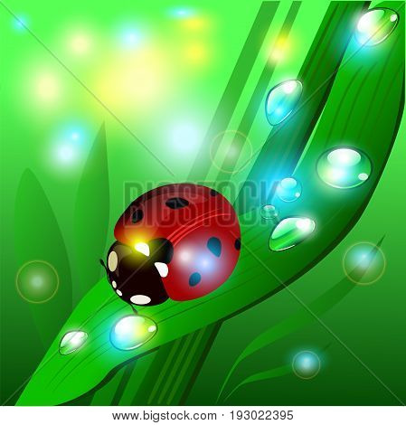 Vector summer illustration with the glare of the sun, ladybug, grass and shining sparcles