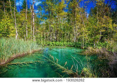 transparent lake in the Plitvice National Park Croatia