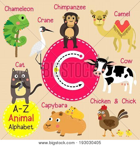 Cute children zoo alphabet C letter tracing of funny animal cartoon for kids learning English vocabulary vector Illustration.