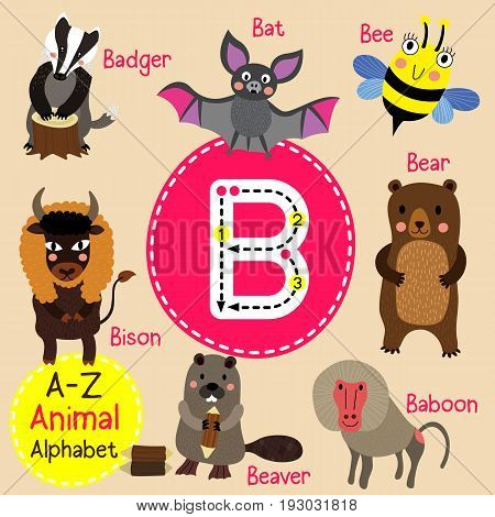 Cute children zoo alphabet B letter tracing of funny animal cartoon for kids learning English vocabulary vector Illustration.