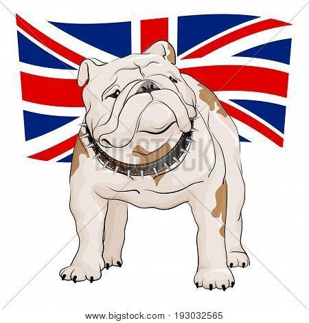 English bulldog on a background of the British flag