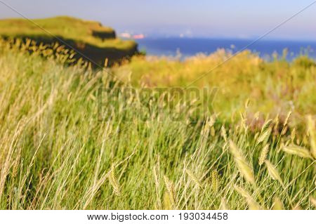 Summer landscape in Ukraine. Rolling green hills with wild flowers in morning light sea on the horizon. Natural Photography. Selective focus