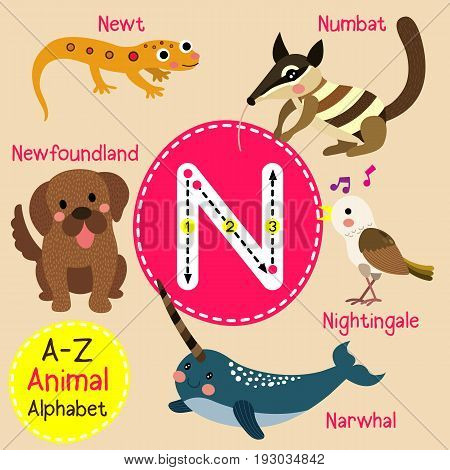 Cute children zoo alphabet N letter tracing of funny animal cartoon for kids learning English vocabulary vector illustration.