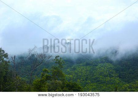Morning fog in a wild tropical rainforest in Kaeng Krachan national park Thailand