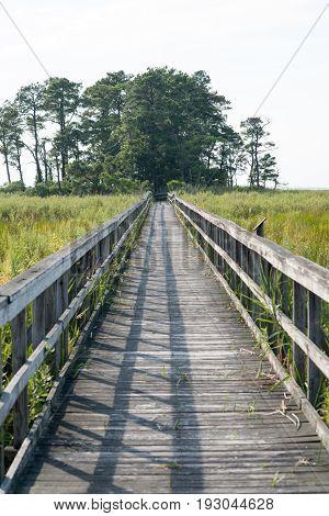 View of Boardwalk through marsh reeds near Rock Hall, MD