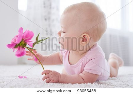 Close-up shot of a lovely baby holding rosy flower called peony; lying on a white carpet. Cute Child playing with flower indoors