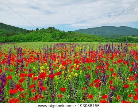 Spring meadow of flowers. Nature composition.