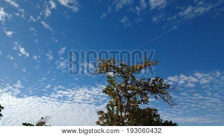 Arvore contraste no céu azul Ceará Brasil