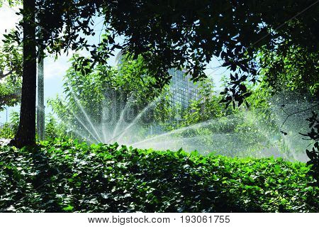 Automatic watering. Need to moisten vegetation with heat.