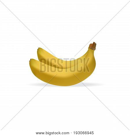 Realistic illustration of bunch of bananas isolated on white background, banana icon, vector illustration