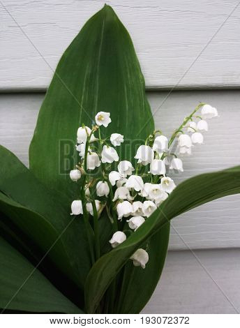 Lilly of the valley flowers and leaves bouquet isolated on the background