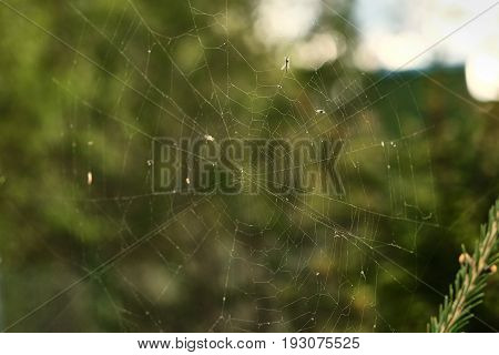 the web is on a branch with insect in the sun