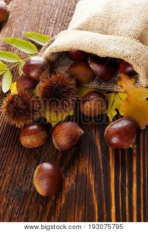 Chestnuts with leaves in burlap bag on wooden table.
