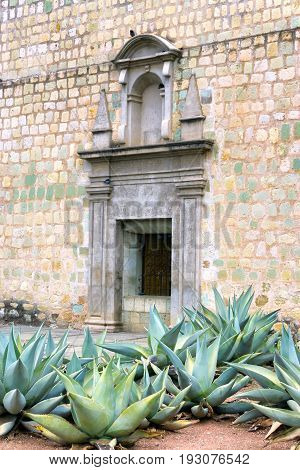Agave plants growing next to the Cathedral of Our Lady of the Assumption in Oaxaca Mexico