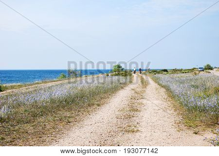 OLAND, SWEDEN - JUNE 09; Coastal winding country road with cycling tourists and blue flax flowers at the swedish island Oland on June 09, 2017
