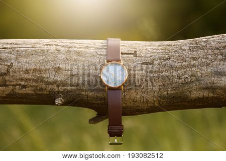 watch on the tree adventure and tourism summer