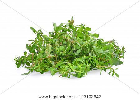 pile of green glinus oppositifolius (L.) tropical herbs isolated on white background