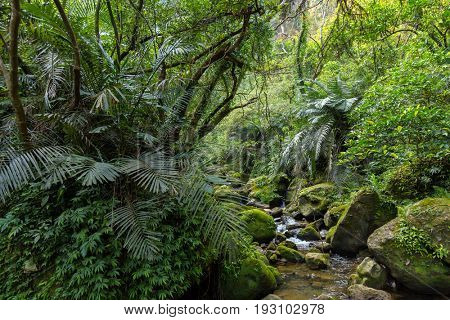 Wild wet jungle and river in the Sandiaoling national park, Taiwan