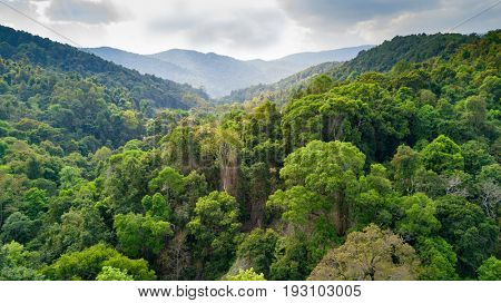 Aerial view of rainforest in the Doi Inthanon national park, Thailand