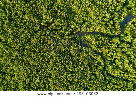 Aerial mangrove forest top view in the Phang Nga bay, Thailand