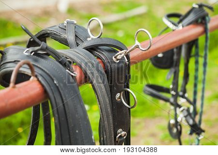 Horse Harness Hanging On The Railing
