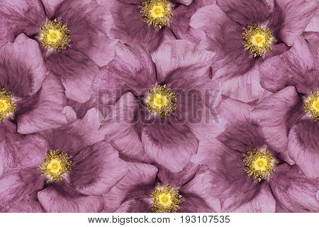 Floral background Pink flowers. Floral collage. Flower composition. Closeup. Nature.