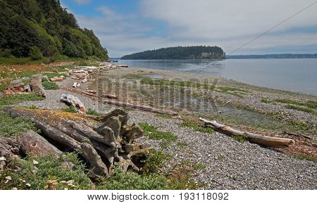 Driftwood On The Shore Of Shine Tidelands State Park On Bywater Bay Near Port Ludlow In The Puget So