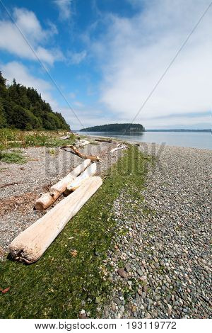 Driftwood on the shore of Shine Tidelands State Park on Bywater Bay near Port Ludlow in the Puget Sound in the Pacific northwest in Washington State US of A